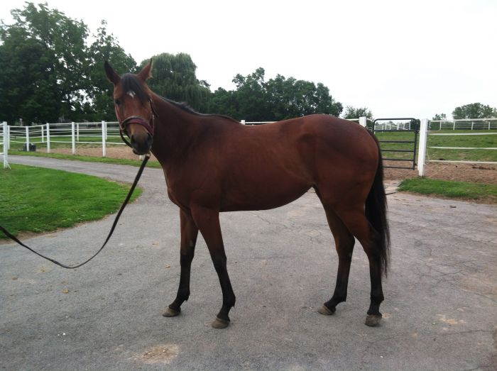 3yr. Forestry filly out of La Riveria (Affirmed)