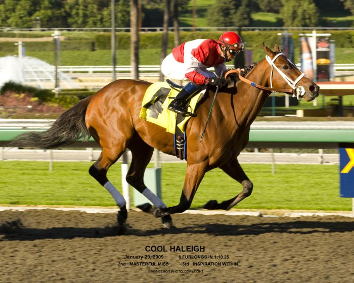 High Class Race Mare, International Pedigree by Champion Sprinter Gulch - Cool Haleigh