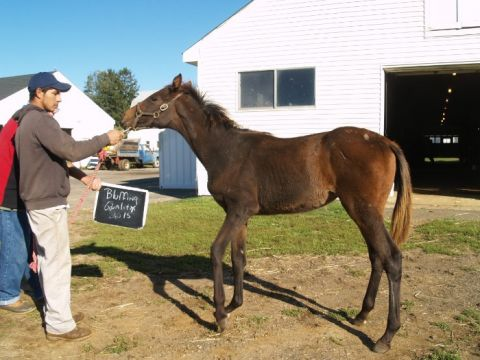 New Jersey-bred weanling filly by Corinthian