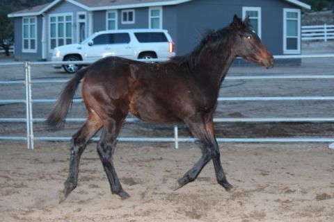 YEARLING FILLY OUT OF MULTIPLE STAKES WINNING MARE