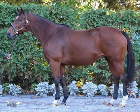Tempered Appeal Broodmare (Earner of $332,000++)!