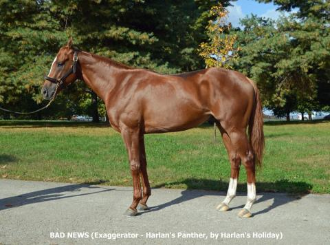 BAD NEWS - 2018 Colt by Exaggerator