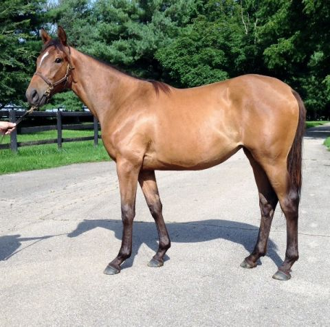 Filly out of Multiple NY Stakes Winner FOND