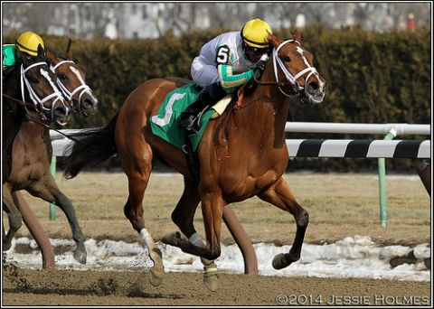 Stakes Placed Filly by Wildcat Heir, 1st & 2nd Start Winner for Pletcher in NY
