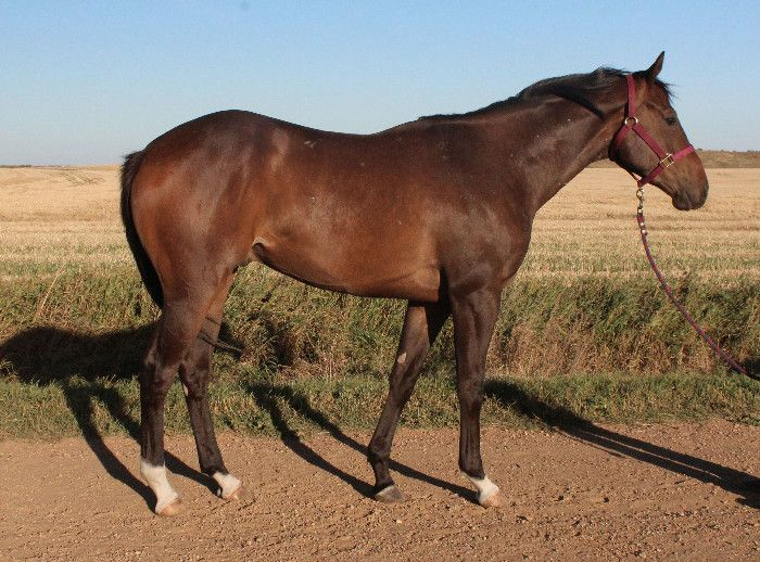 Nice big colt with lots of potential!