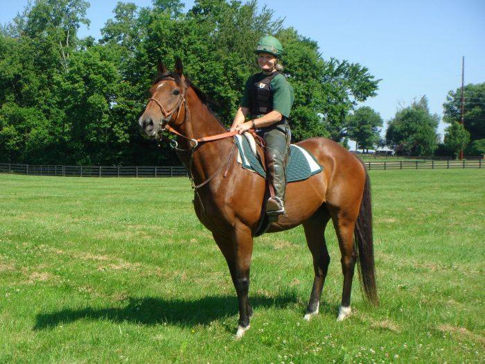 Boundary gelding with lots of potential!