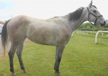 CATCHIMIFUCAN 2008 gelding