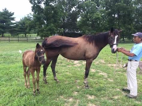 Package Deal - Mare and Foal