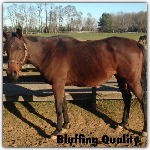 Broodmare by Elusive Quality in foal to Orientate