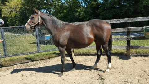 2008 One Crazy Girl broodmare.  Price reduced!, Stud Fee Included. Mare now priced below stud fee at 3,000.00!.