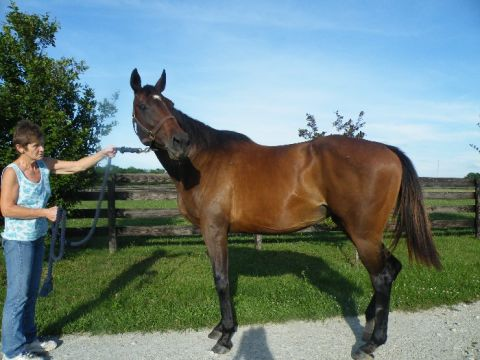 Swain mare in foal to Glasnost