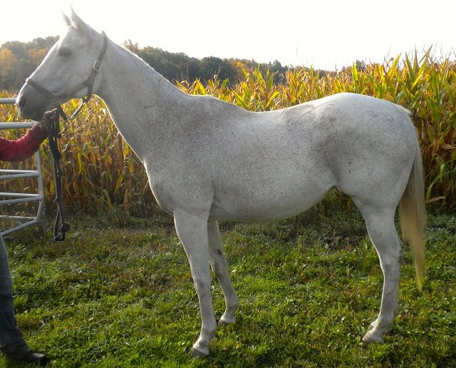 Proven mare by Northern Wolf.  Uncork New York