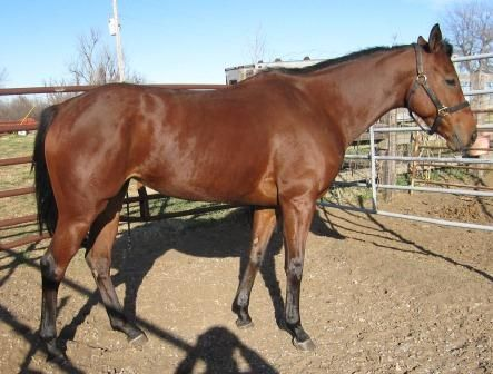 Winning Posse filly bred to G1 sprinting Millionaire