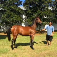 Warriors Reward filly- Need to Sell