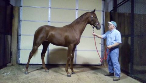 ALGORITHMS  FILLY (2014)