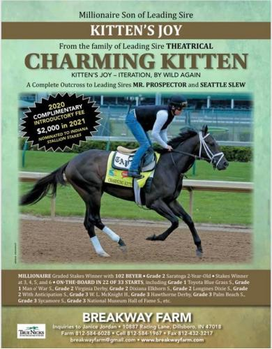 CHARMING KITTEN - 2020 LFSN Season - FREE to Approved Mares