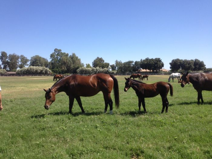 Broodmare, Foal, Yearling & 2013 Heatseeker (IRE) Season