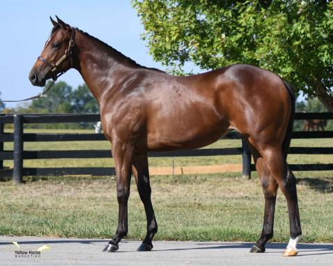 Yearling Filly by BERNARDINI